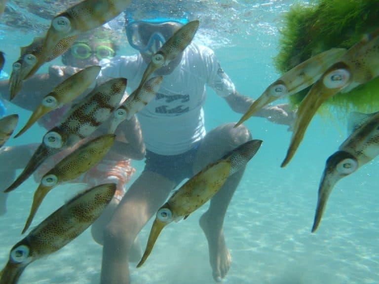 Gros plan sous l'eau d'un banc de seiches et enfants